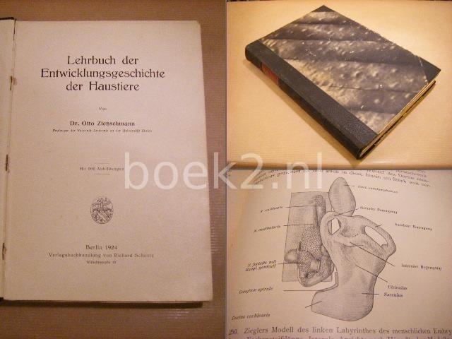 ZIETZSCHMANN, DR. OTTO - Lehrbuch der Entwicklungsgeschichte der Haustiere