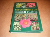 encyclopedia-of-border-plants