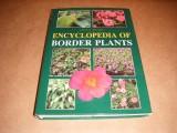 encyclopedia-of-border-plants
