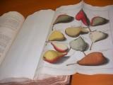 Over Vruchten en Gewassen. Beschrijving en afbeeldingen van de beste soorten van appelen en peeren, meest geacht en zorgvuldig aangekweekt in Duitschland, in Frankrijk, in Engeland, en in de XVII provintien.